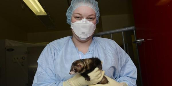 تایلند نخستین مشتری واکسن روسیه برای حیوانات شد
